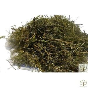 Амми зубная трава