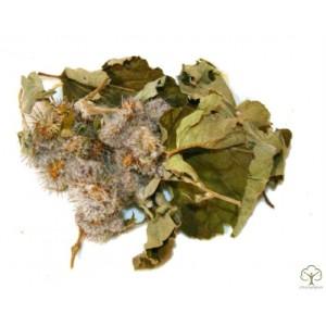 Лопух Большой листья