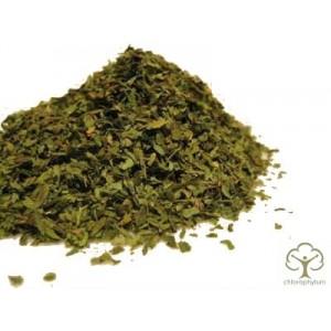 Любисток лекарственный трава