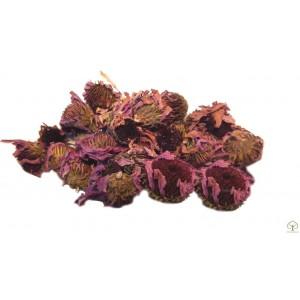 Эхинацея пурпурная цветки