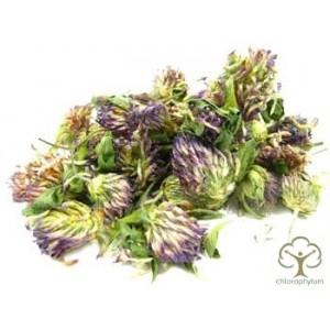 Клевер луговой цветки