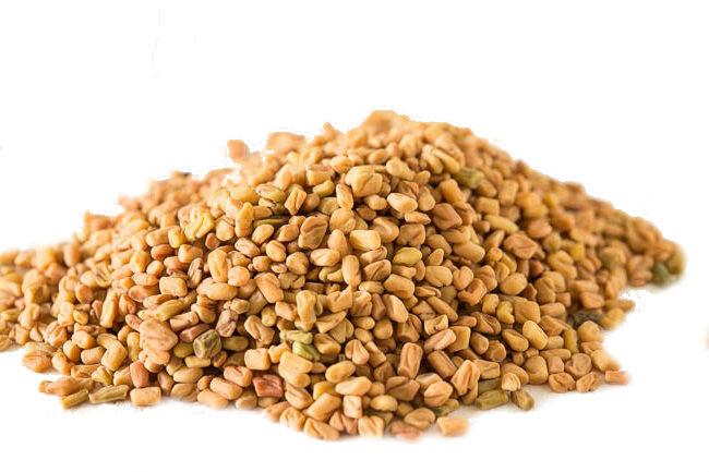 Шамбала (Пажитник сенной